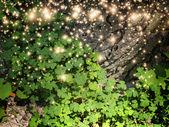 Shamrock Leaves — Stock Photo