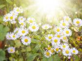 Flor branca — Foto Stock