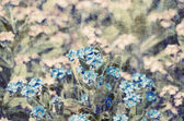 Vintage Forget-me-not Flower Background — Stock Photo