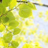 Spring Vitality Leaves  — Stock Photo