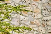 Stone Wall With Greenery — Stock fotografie