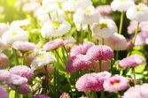 Bright Flower — Stock Photo