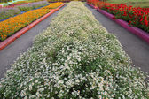 Row of flowerbed in agriculturist farm. — Stock Photo