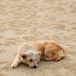 Dirty dog lie down waiting for someone on sand beach. — Stock Photo #33779911