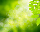 Natural green background with green leafs — Stock Photo