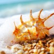 Sea shell — Foto de Stock