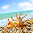 sea shell&quot — Stock Photo #12337461