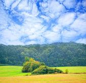 Un día nublado en la naturaleza — Foto de Stock