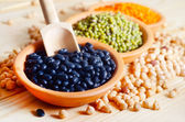 Fasulye tohumu çeşitleri — Stok fotoğraf