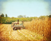 Corn harvesting started — Stock Photo