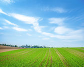 Green field in Austria — Stock Photo