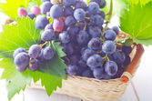Dark blue grape — Stock Photo