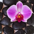 Zen stones and flower — Stock Photo #14311327