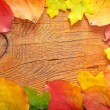 Leaves on wood — Stock Photo