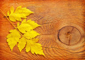 Leaves on wooden board — Stock Photo