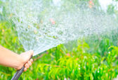 Working watering garden from hose — Stock Photo