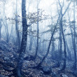 mist in het forest — Stockfoto