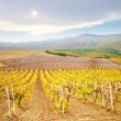 Vineyard in Crimea — Stock Photo #19641933