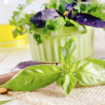 Fresh aroma spice — Stock Photo