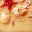Shells on wooden board - Stock Photo