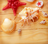 Shells on wooden board — Stock Photo
