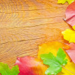 Leaves on wooden background — Stock Photo