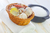 Shells and sea salt — Stock Photo