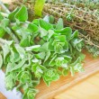 Stock Photo: Oregano with thyme
