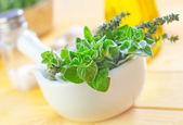 Oregano in a bowl — Stock Photo