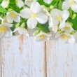 Jasmine spring flowers frame on white background — Stock Photo