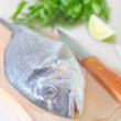Dorado fish — Stock Photo