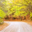 Road in the autumn fores, Crimea road — Stock Photo