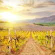 Vineyard in Crimea, mountain in Crimea — Stock Photo #28016409