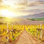 Vineyard in Crimea, mountain in Crimea — Stock Photo