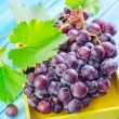Stock Photo: Grape