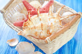Shells in the basket — Stok fotoğraf