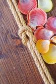Mořské mušle a lana — Stock fotografie