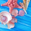 Sea shells — Foto de Stock