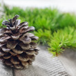 Pinecones on a table — Foto de Stock