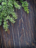 Green pine needles — Stock Photo