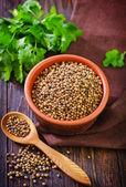 Coriander and parsley — Stock Photo