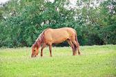 At üstünde bir çayır — Stok fotoğraf