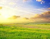 Green field — Stock Photo