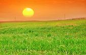 Campo verde — Foto de Stock
