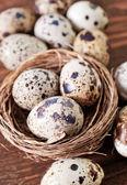 Bıldırcın yumurtası — Stok fotoğraf