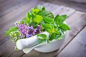 Aroma herb — Stock Photo