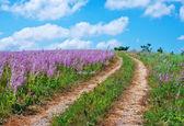Flower field — Stockfoto