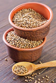 Coriander in bowls — Stock Photo