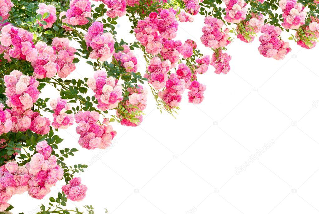 Обои цветы астры цветение лето картинки на рабочий стол
