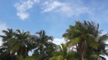 Palms and blue sky — Vídeo Stock